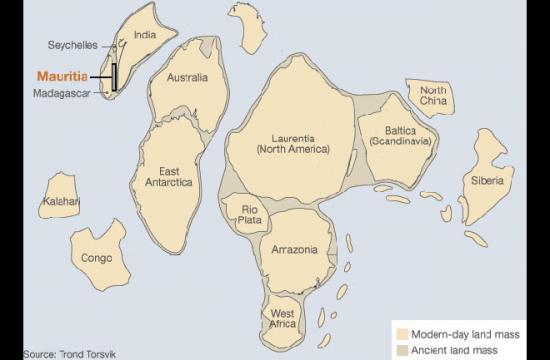 2013-02-rodinia-mauritia.jpg