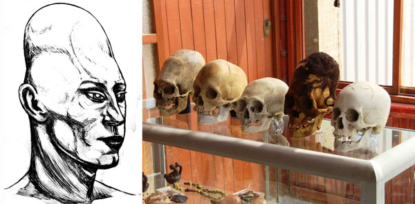 Alien selection of paracas skulls