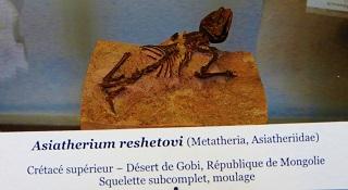 Asiatherium reshetovi mini