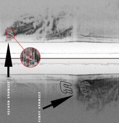 baltic-robert-buck1.jpg
