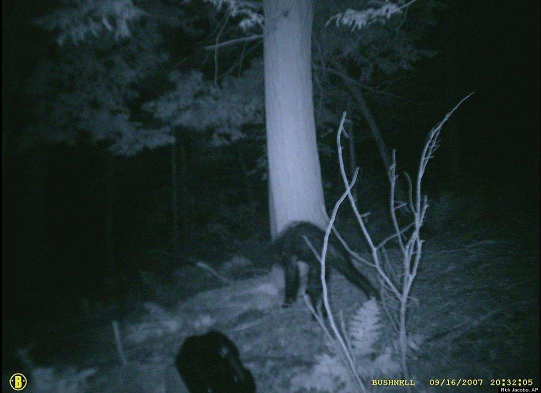 bigfoot-pennsylvanie-10-2007.jpg