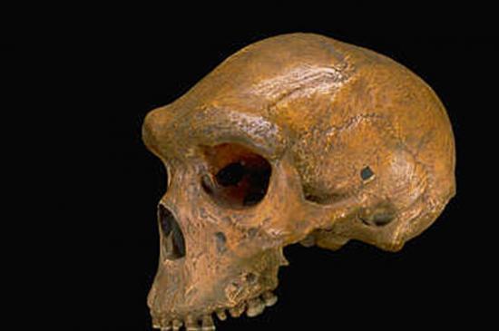 broken-hill-balle-neandertal.jpg