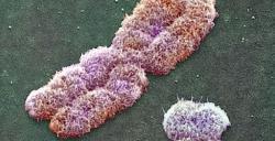 chromosome.jpeg