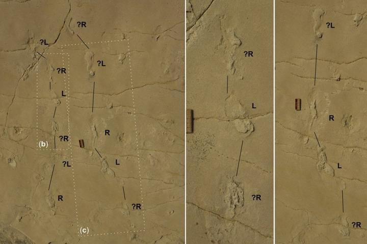 Crete empreintesfossiles 5 7ma4