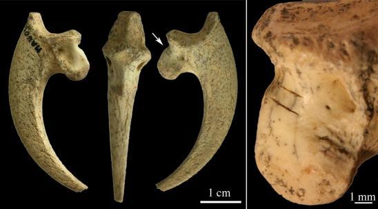 Griffes rapacesprehistoriques2
