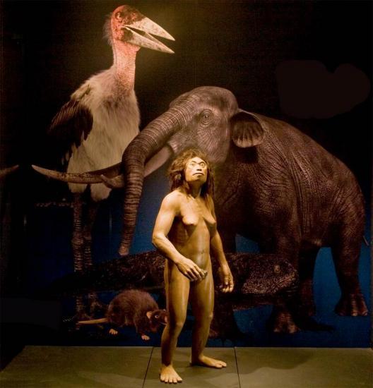 hobbit-homo-floresiensis.jpg