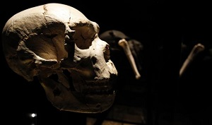 Homo heidelbergensis2 mini