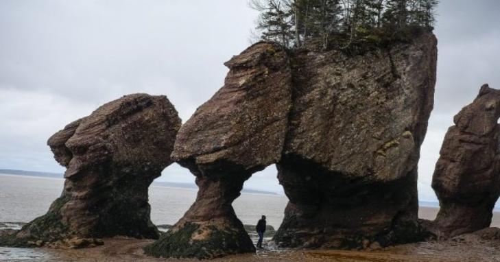 Hopewellrocks canada