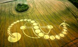 inverted-s-crop-circle-west-woodhay-down-wiltshire-29th-july-2011.jpg