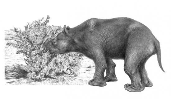 megafaune-australie.jpg