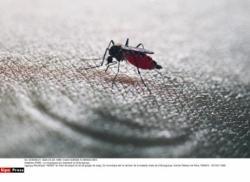 moustique-tigre.jpg