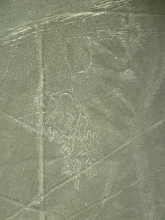 Nazca glyphe