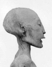 Nefertitiskull