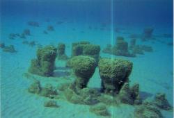 ocean-explorer-balticanomaly2012e.jpg