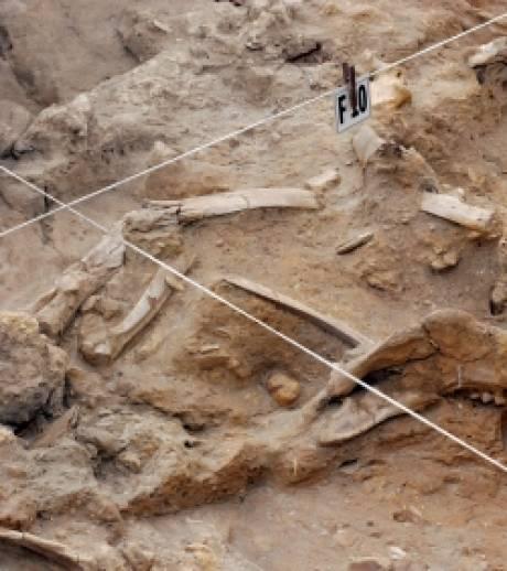 os-humain-vieux-de-67-000-ans.jpg