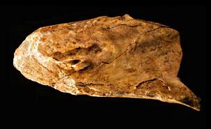 Outilosneandertalien 2014 2015