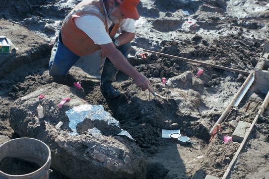 Paleontologue du museum d histoire