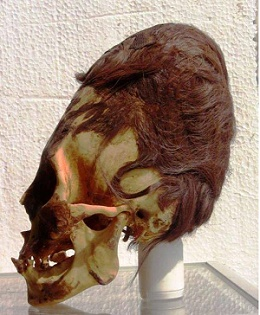 Paracas skull with its red hair mini