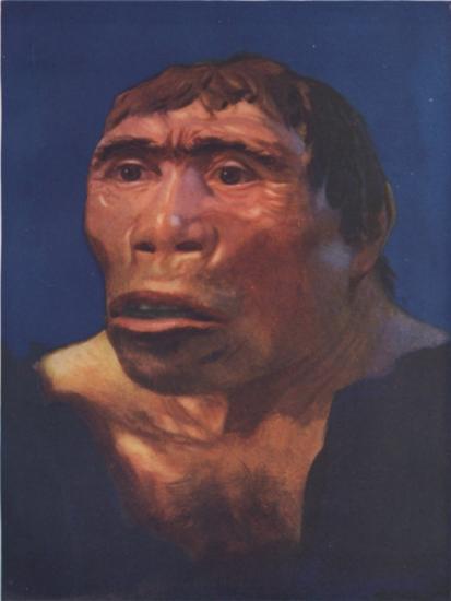 pithecanthropus-erectus-java.jpg