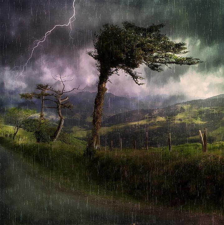 Pluie vent arbres cc0free
