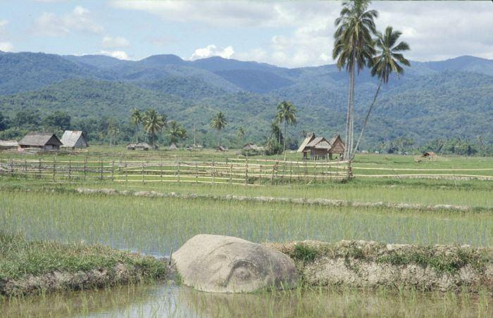 Sulawesi taman nasional lore lindu indonesie