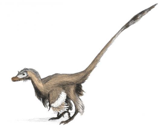velociraptor-dinoguy2.jpg