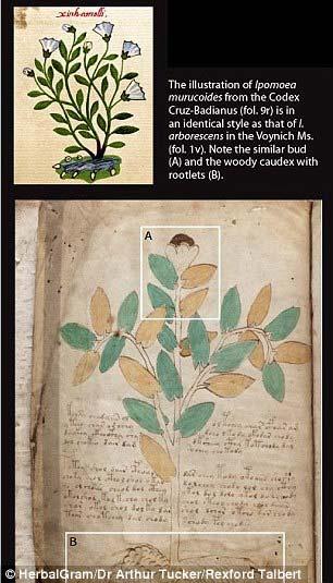 Voynich 2