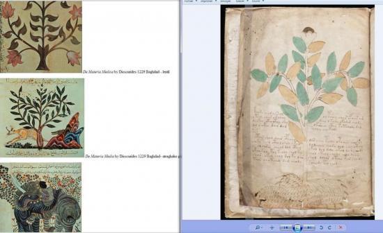 voynich-arbre-1.jpg