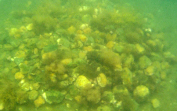 Tumulus-OakIsland