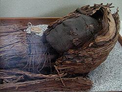 250px momia cultura chinchorro a