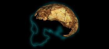 Afriquesud dnh 134 homo erectus cranium6 copy