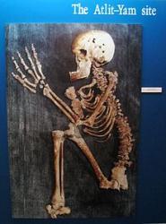 alit-yam-human-skeleton.jpg