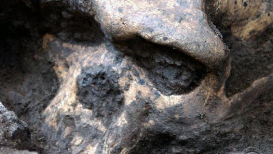 ancient-skull.jpg