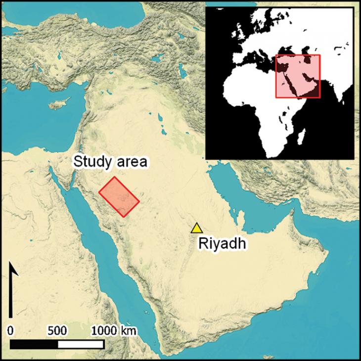 Arabie sitesetudies