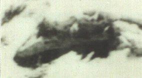 ararat-anomaly-1949-closeup.jpg