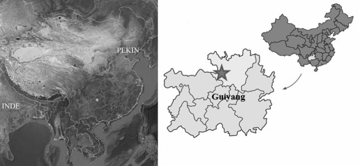 Chine tongzihominide3