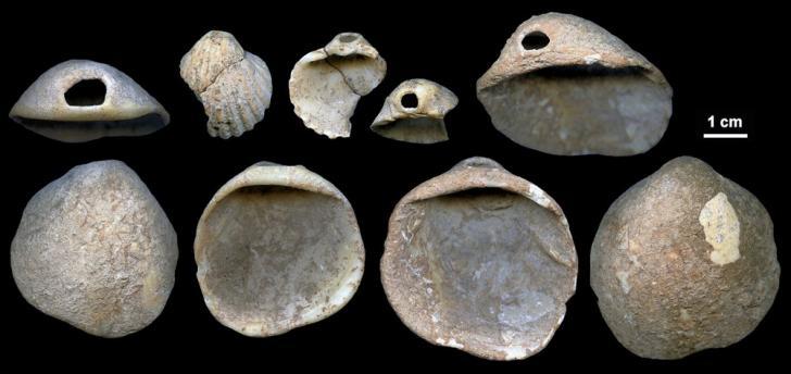 Coquillage neanderthaliens espagne