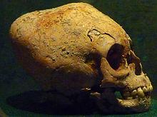 Crane maya museo nacional de antropologia