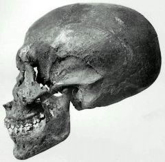 Crane trouve dans la tombe kv35 de amenhotep 2