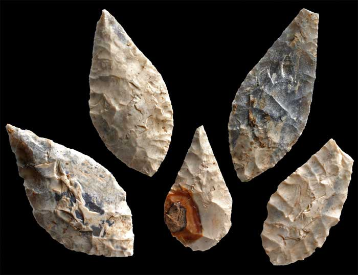 crete-erectus.jpg