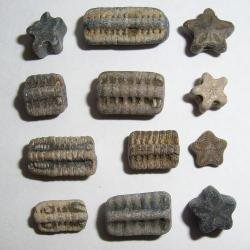 crinoid-fossils.jpg