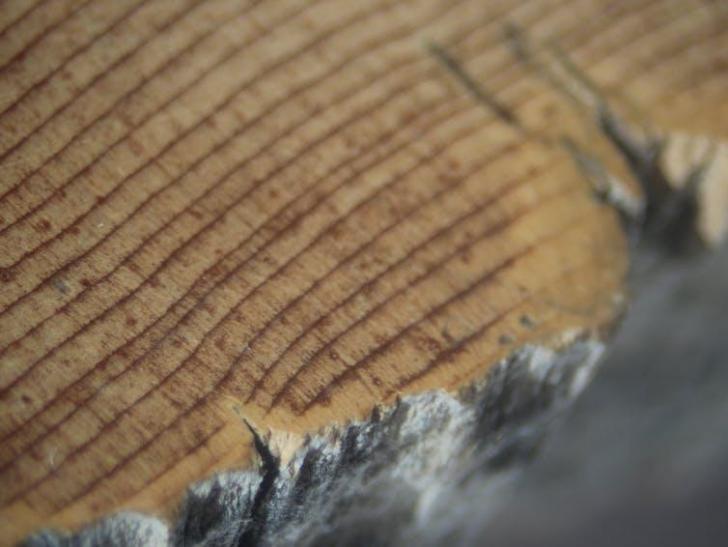 Datatation des anneaux de pin bristlecone au deuxieme millenaire avant notre ere