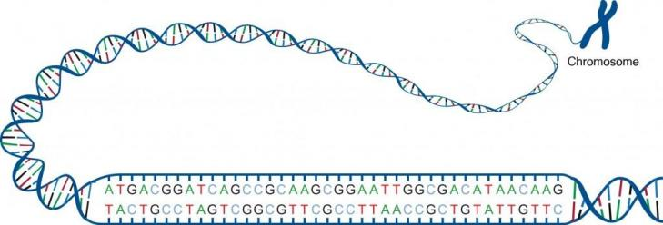 Du chromosome au code 1024x348