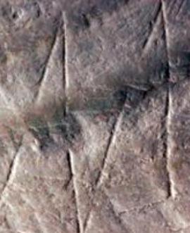 Erectus gravure coquille 500000 ans