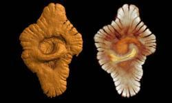 faunegabon-2ga-fossile2.jpg