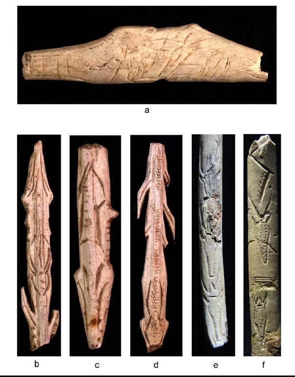 Figure 14 caprines et cervides representes en vue conventionnelle de face