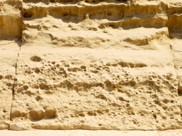 fossile-creature-2.jpg