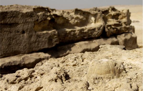 fossile-creature.jpg