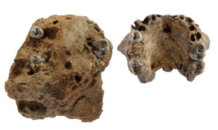 Fossiles kenya