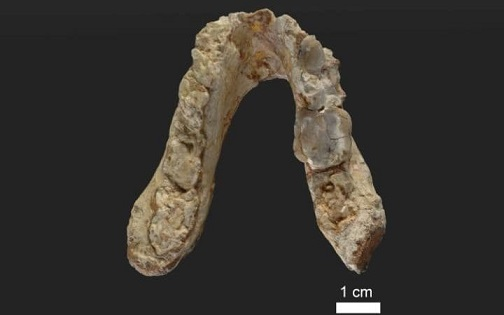 Graecopithecus1